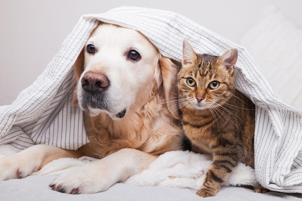 Haustier entlaufen? — kleiner Micro-Chip ganz groß post thumbnail image